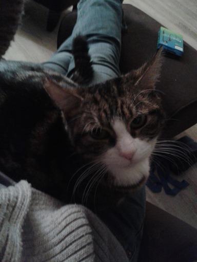 113-cat sitting