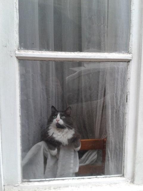 6.1-love this cat